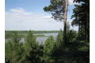 Семь гектаров в сосновом бору за 145 млн рублей